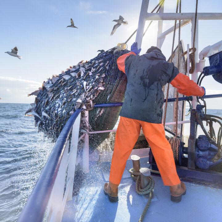 En man tar upp fisknät ur vattnet på båten