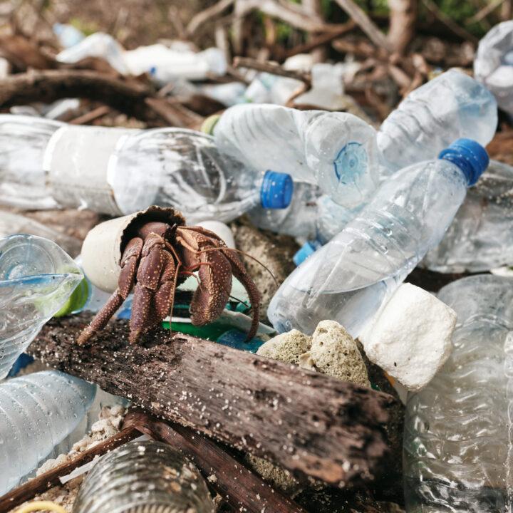 strand, plastavfall, djur, krabba, miljö, gift, plastflaskor, förorening.