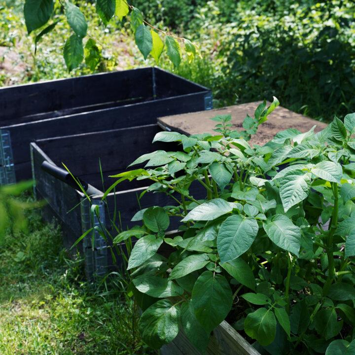 Växtkompost, kompost, trädgård