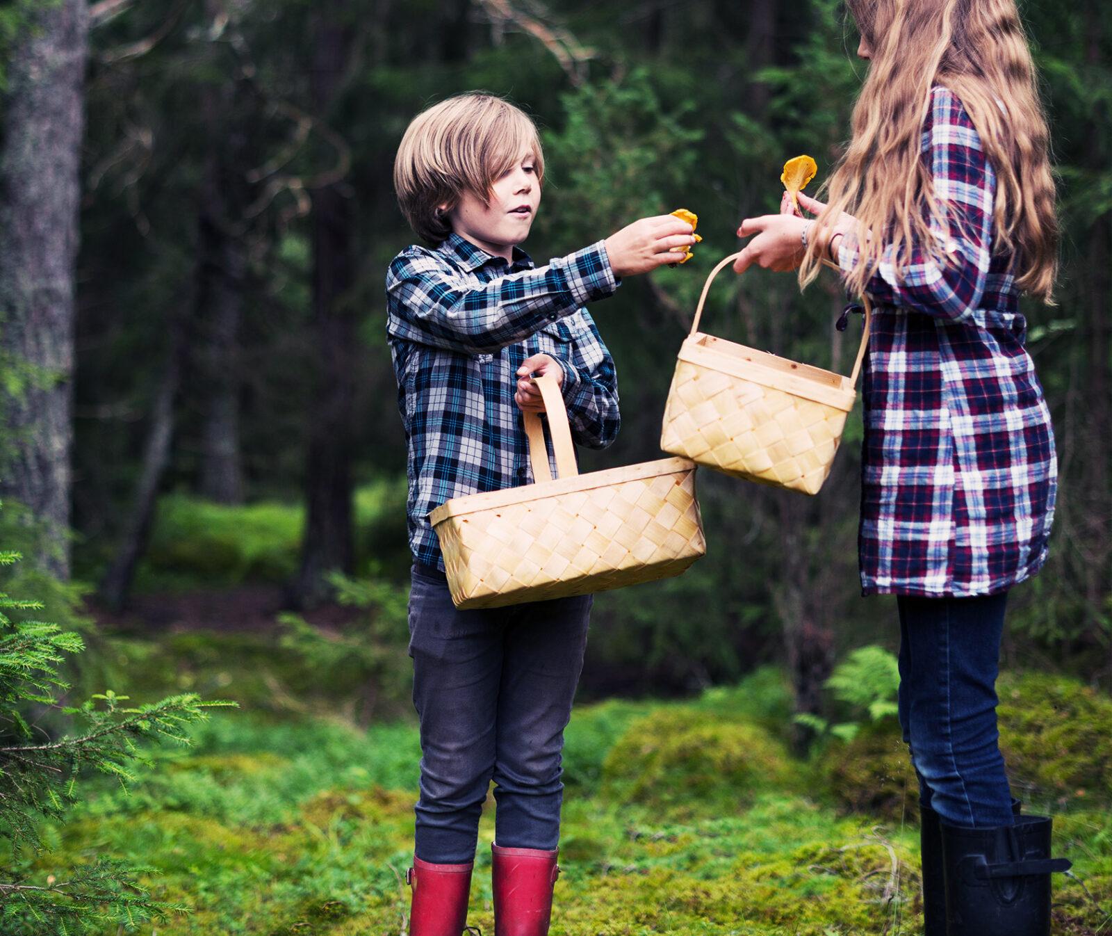 barn, skog, svamp, korg, allemansrätten