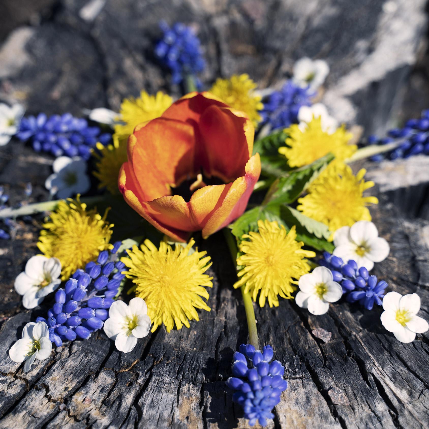 mandala, blommor, vårblommor,