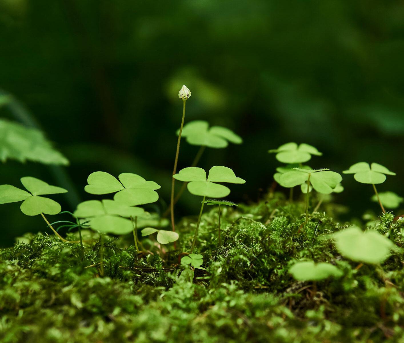 Ätbara växter, naturens skafferi, harsyra