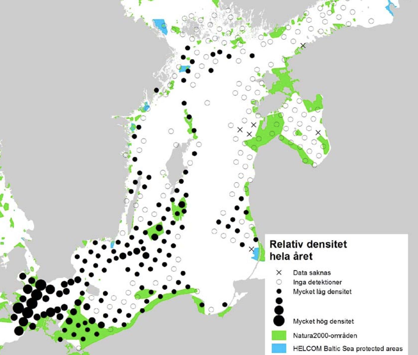 Tumlare, Östersjötumlare