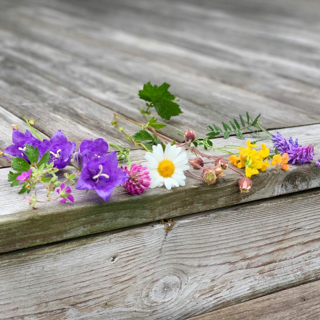 sju sorters blommor ligger på ett trädäck, Midsommarblomster, stor blåklocka, rödklöver, humleblomster, käringtand och kråkvicker.