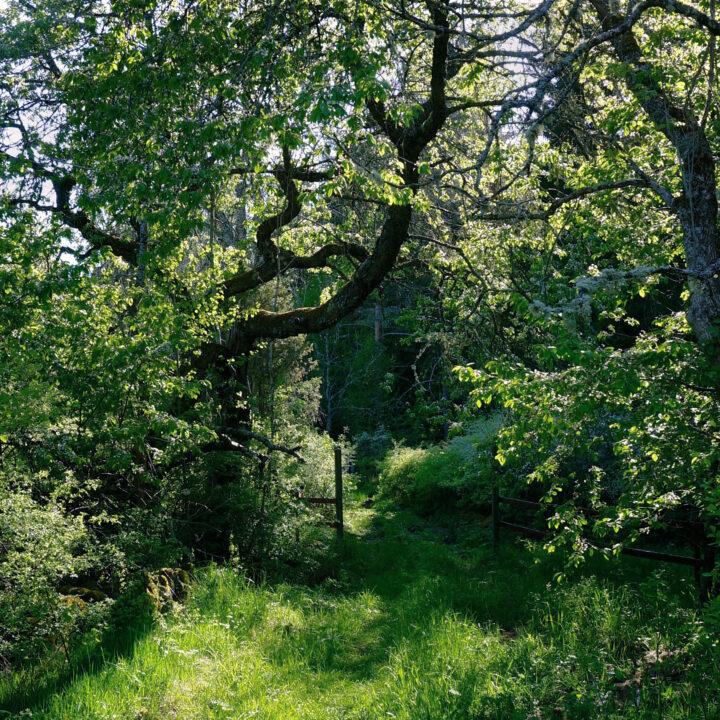 naturstig, skog, stig