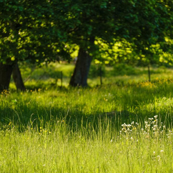 Äng med träd i bakgrunden.