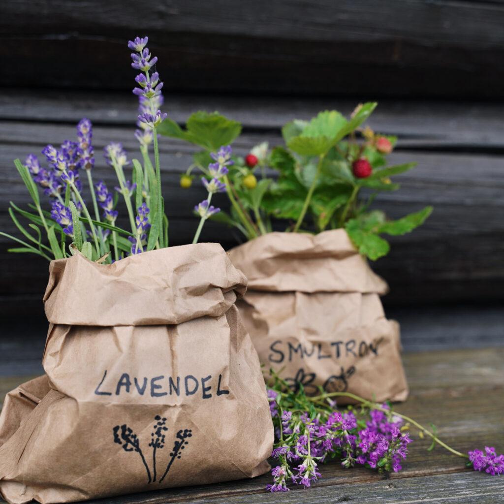 bytväxter, lavendel, smultron, stickling