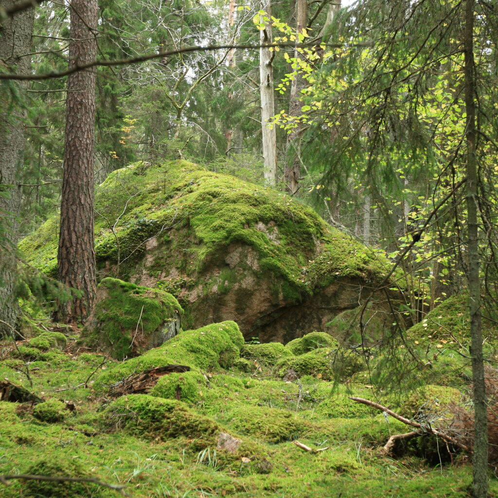 Reservat,gammelskog,Uppland