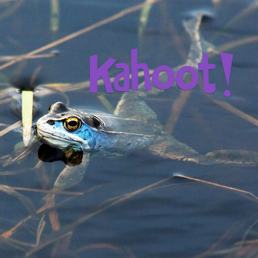 kahoot, quiz, frågesport, groda, grodor