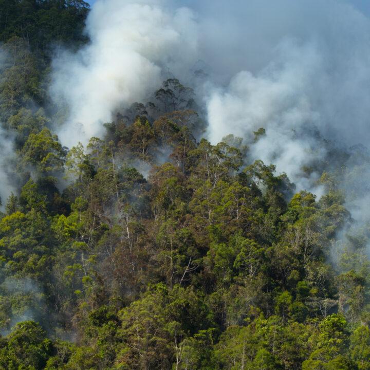 amazonas, aerial, wildfire, Fair Finance Guide rapport, regnskog, skövlad,