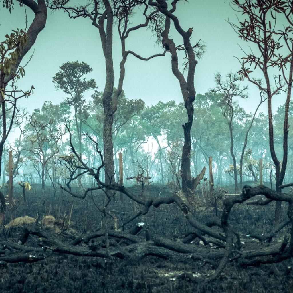 Amazonas, aerial, wildfire, Fair Finance Guide rapport, regnskog, skövlad, nedbränd, bränd, skogsbränder