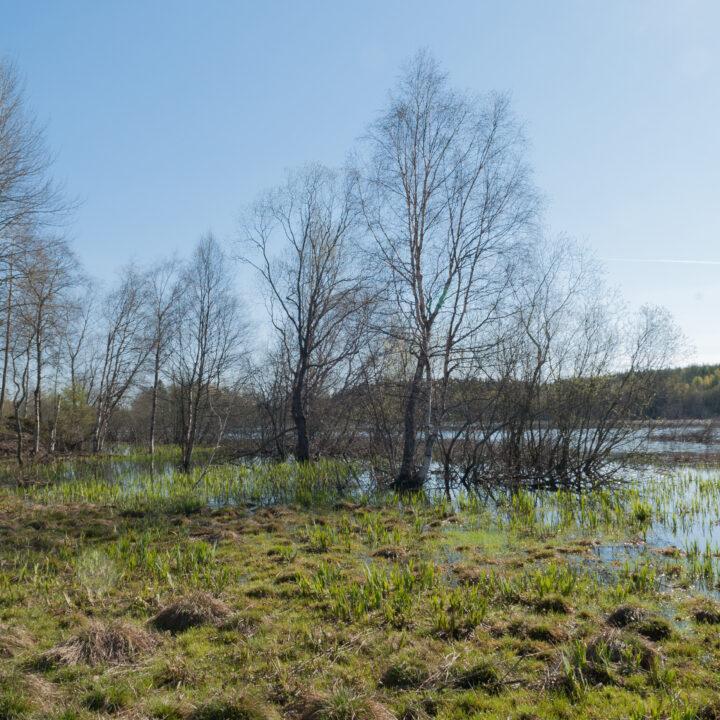 Betesmark,betesmarker,hage,hagar,landskap,våtmark,vår,våren,vårflod,träd,lövträd,vatten,vattenyta